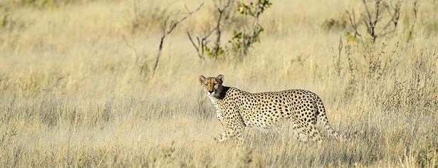 Kalahari 2012-06-152e